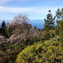 Wo ewiger Frühling herrscht